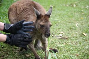 Handschuh I