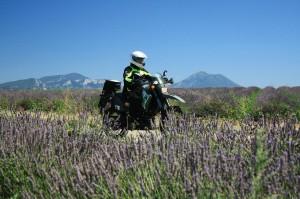 Provence I 01