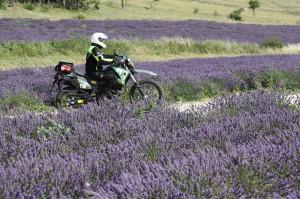 Provence I 25