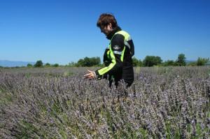 Provence I 26